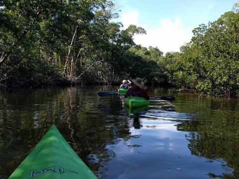 """Paseando en kayak en el J.N. """"Ding"""" Darling National Wildlife Refuge en Sanibel Island, Florida"""