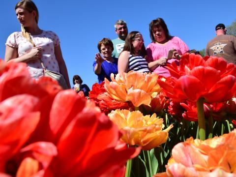 Visitantes viendo las coloridas flores durante el Albany Tulip Festival